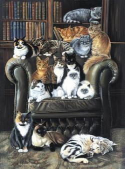 Cat Jigsaw Puzzles Kitten Jigsaw Puzzles